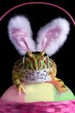 Easter Froggy Stock Image