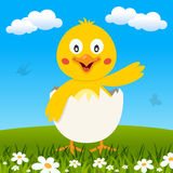 Easter Funny Chick in a Meadow. A cute Easter chick into an eggshell in a meadow with green grass and flowers. Eps file available vector illustration
