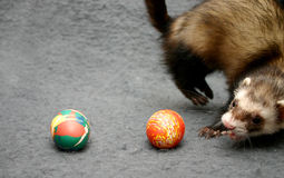 easter game Stock Photography