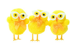 Easter geek chicks. Easter geek chickens isolated on white background stock images