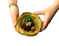 Easter gift with a nest with small colorful eggs on a white isolated background Royalty Free Stock Photos