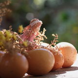 Easter girl looking the easter eggs Royalty Free Stock Photography