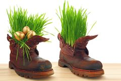 Easter golden eggs in old shoes, with fresh grass Stock Photo