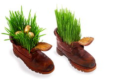 Easter golden eggs in old shoes, with fresh grass Royalty Free Stock Image