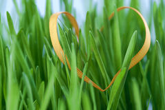 Easter grass Royalty Free Stock Photos