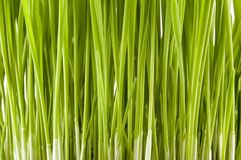 Easter grass Stock Images