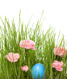 Easter grass. Easter egg hidden in the grass with carnations royalty free stock photography