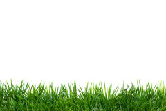 Easter Grass border, isolated on white Royalty Free Stock Photo