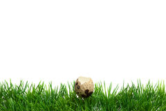 Easter Grass border, open quail egg Stock Photo
