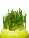 Easter grass Stock Image