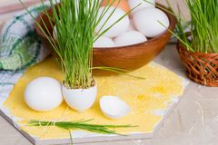 Easter grass growing in egg shell, shallow focus, Yellow background, white eggs in a basket on a wooden background. Easter grass growing in egg shell, shallow Stock Photo