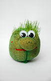 Easter grass growing in head Stock Photos