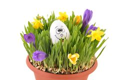 Easter grass and happy egg. Stock Photos
