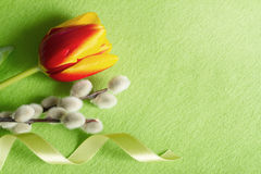 Easter green abstract background composition with tulips Royalty Free Stock Image
