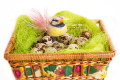 Easter green basket nest with quail eggs Stock Photo