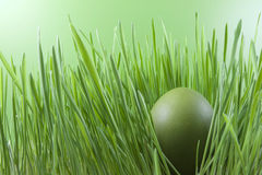 Easter green egg on the grass Stock Photography