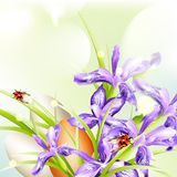 Easter greeting background with eggs and ladybugs and flowers Royalty Free Stock Photos