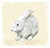 Easter  greeting card with bunny.  Watercolor style. Stock Photos