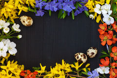 Easter greeting card, frame background with eggs and spring flowers. Copy space. Royalty Free Stock Photo