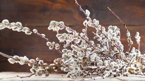 Easter greeting card with willow bunch over wooden backgro. Und stock image