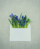 Easter greeting card. Scilla blue and white mailing envelope. Easter spring card. Congratulatory envelope with a bouquet of wild flowers - blue forest wooded Royalty Free Stock Image