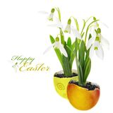 Easter Greeting with Snowdrops Stock Photo