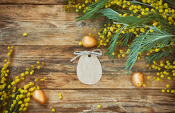Easter holiday background with branches of mimosa, golden eggs Stock Images