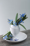 Easter holiday background with flowers in egg-cup Royalty Free Stock Image