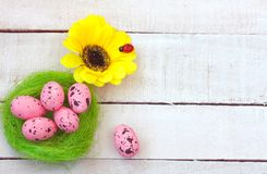 Easter holiday background, pink eggs, yellow flower. On white wooden table Stock Images