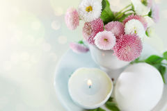 Easter holiday card with daisies in eggcup Royalty Free Stock Images