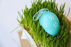 Easter holiday decoration with  egg and grass Stock Photos
