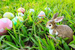 Easter. In easter holiday,easter eggs,easter bunny Royalty Free Stock Images
