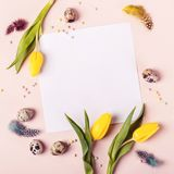 Easter holiday frame for greeting message. Yellow tulips, eggs and feathers.  royalty free stock images