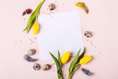 Easter holiday frame for greeting message. Yellow tulips, eggs and feathers around sheet of paper.  royalty free stock photography