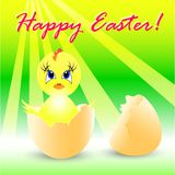Easter holiday illustration with chicken Royalty Free Stock Image