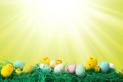 Easter Holiday Image With Chicks Eggs and Grass Royalty Free Stock Photos