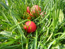 Easter holidays eggs Royalty Free Stock Images