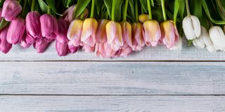 Easter horizontal banner. Multicolored tulips on a horizontal wooden background. Top view. Multicolored tulips on a horizontal wooden background. Top view stock image