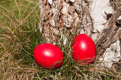 Easter hunt Stock Photos