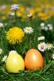 Easter hunt eggs in meadow Royalty Free Stock Image