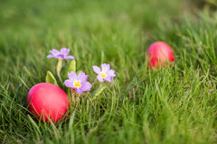 Easter hunt Stock Photography