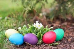 Easter hunt in spring Stock Images