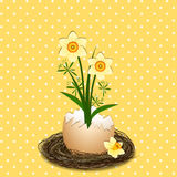 Easter Illustration Yellow Daffodil Flower on Polka Dot Stock Photo