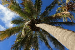 Easter Island Palm Tree Beach Anakena Royalty Free Stock Image