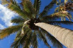 Easter Island Palm Tree Beach Anakena Royalty Free Stock Image
