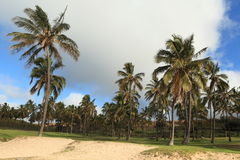 Easter Island Palm Tree Beach Anakena Royalty Free Stock Photos