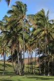 Easter Island Palm Tree Beach Anakena Royalty Free Stock Photos