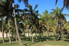 Easter Island Palm Tree Beach Anakena Royalty Free Stock Photography