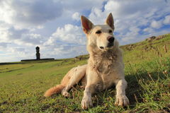 Easter Island White dog II Stock Photography