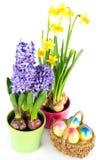 easter jajek kwiatów wiosna Fotografia Stock